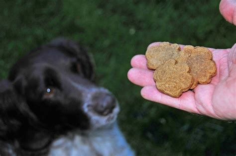 why do dogs always want food food how to choose the best diet for your pet