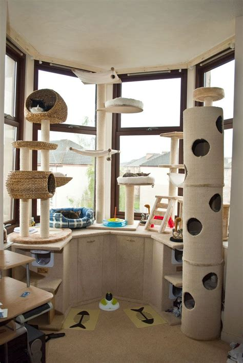 cat room 172 best cat houses shelters images on