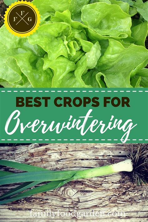 vegetables zone 5 best vegetables to overwinter zone 5