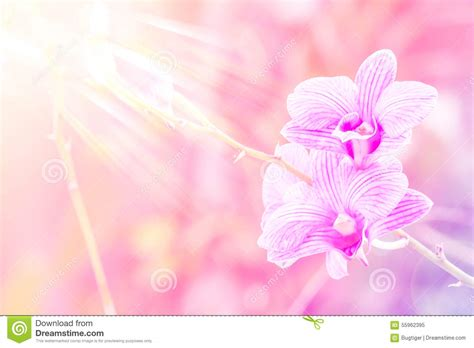 style background color sweet color orchid in soft color and blur style for