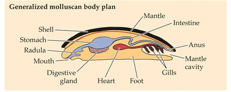 mollusk diagram 301 moved permanently