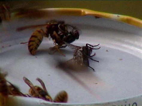 Schädlinge Im Bett by Kleine Fliegen Am Fenster Was Sind Das F R Fliegen Habe