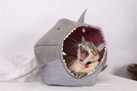 shark bed for cats feline shark beds shark cat bed
