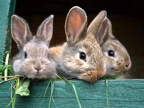 meerschweinchen und kaninchen in einem stall tier infos tierschutzverein bad arolsen und umgebung e v
