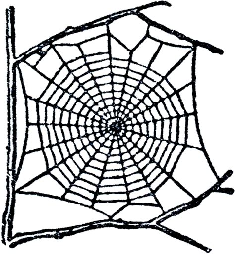 free clipart website free spider web clip the graphics