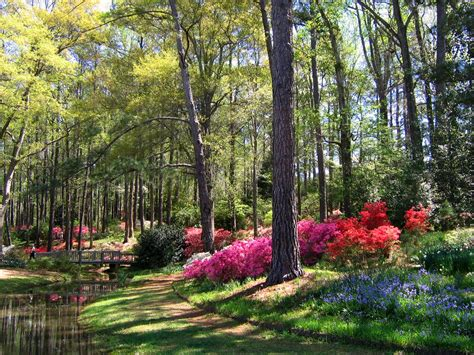 Callaway Gardens by Early April In S Callaway Gardens A Photo On