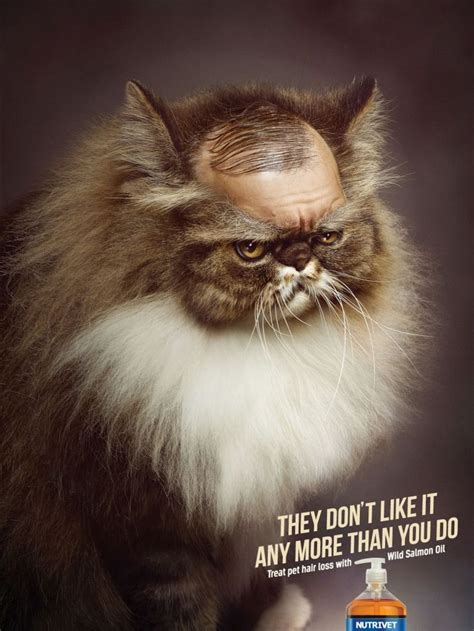 pattern hair loss in cats 90 best creative advertising images on pinterest