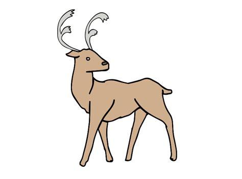 Reindeer tail galleryhip com the hippest galleries
