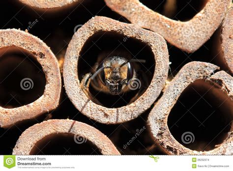 bee stock images image 26232374