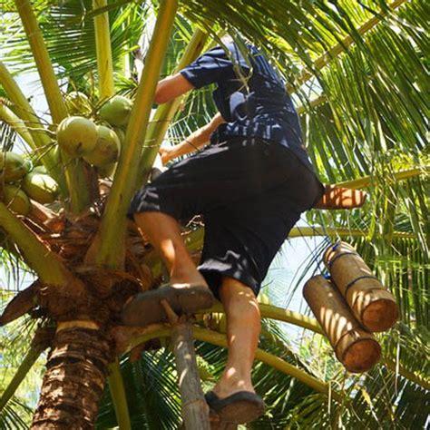 coco sugar indonesia organic coconut palm sugar organic coconut sugar supplier