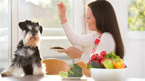what human food can dogs eat what human foods can dogs eat lasvegasnow klas tv