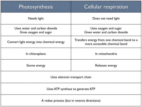 11 Similarities Of And by Similarities Between Photosynthesis And Cellular