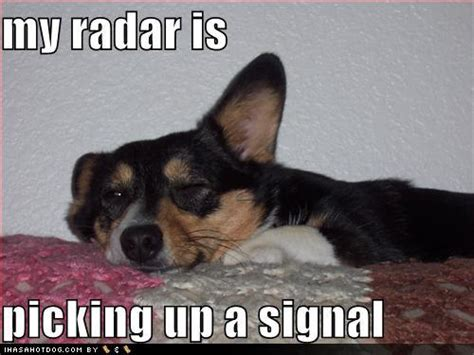 funny image gallery funny dog pictures  captions