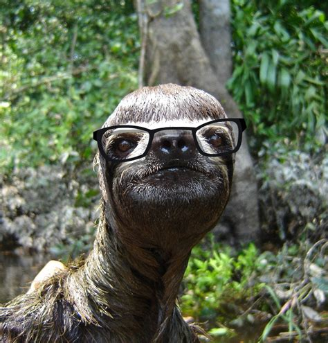 with glasses deal with it glasses sloth www imgkid the image kid has it