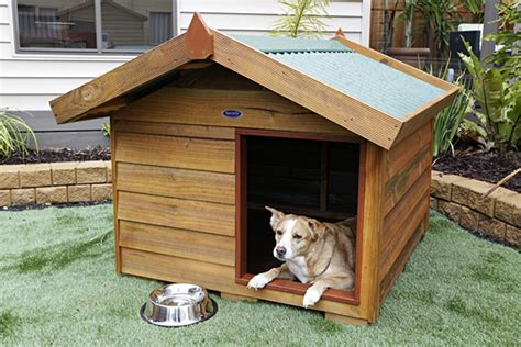 dog house perth large timber dog kennel