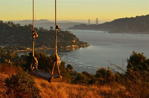 san francisco swing the hippie tree in tiburon ca located off of gilmartin