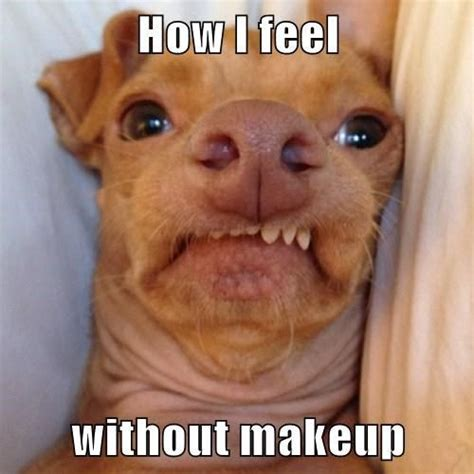 Ugly Dog Meme - ugly dog meme funny pictures quotes memes jokes