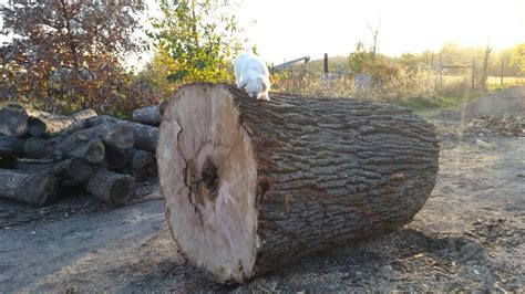 backyard lumberjack backyard lumberjack show us your brag load page 22