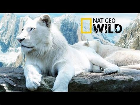 download mp3 album white lion search white lion and download youtube to mp3 music free