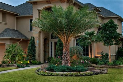 yard tree tropical front yard landscaping ideas with palm trees