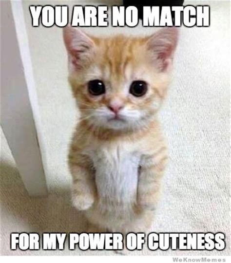 Cute No Meme - cutest kitten ever weknowmemes