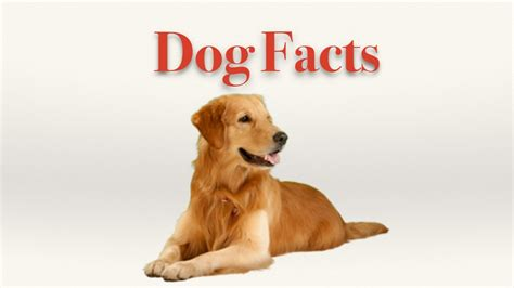 dogs facts facts for
