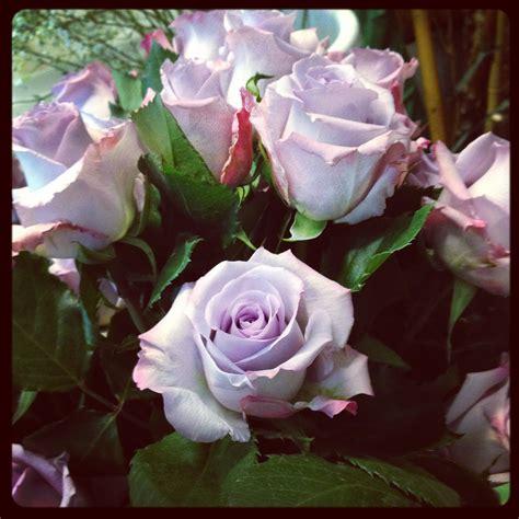fiori color lilla il colore di oggi il lilla e il suo significato