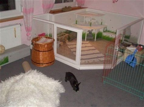 indoor garden for rabbits bunny housing ideas las vegas house rabbit society