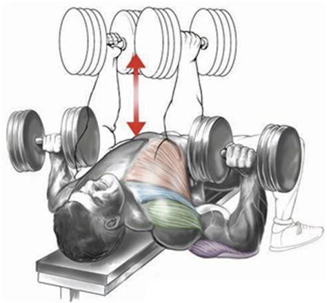 flat bench db press flat bench dumbbell press bodybuilding wizard
