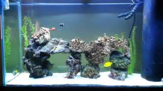 100 Gallon Saltwater Aquarium Fish Tank   YouTube