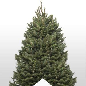 home depot real christmas tree real vs artificial trees the home depot canada