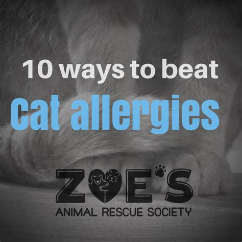 10 Best Ways To Beat A Hangover by Ahh Ahhh Mew 10 Ways To Beat Cat Allergies