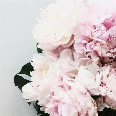 pink peonies instagram 268 best images about les fleurs on pinterest tulip