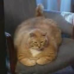 worlds largest cats and world on