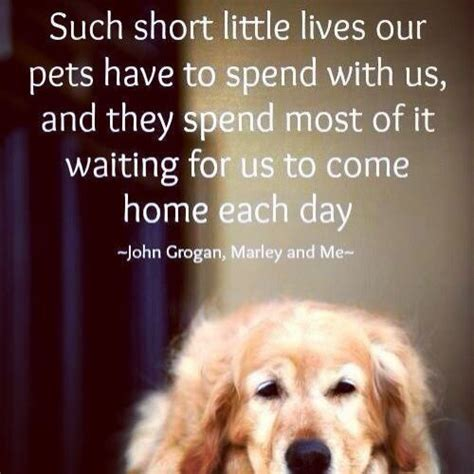 how to make dogs like you 18 best images about quotes on news