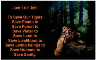 Essay On Tigers In India by To Save Our Tigers 1 Jpg 1436 215 900 Tiger Inspirational Quotes Hd Desktop