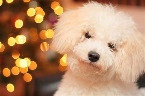 powell s puppy palace 5 easy treat recipes for the holidays