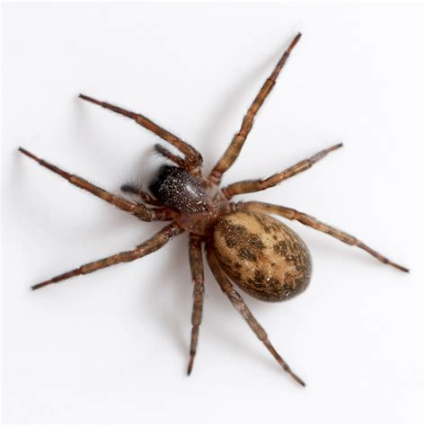 Garden Pests Ontario - spider facts and house pest control techniques