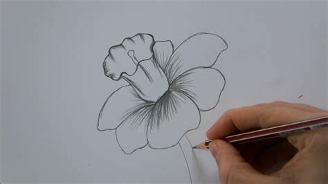 A Drawing Of A Flower by How To Draw A Flower Step By Step In 6 Minutes
