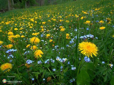 prati in fiore salita con giro ad anello in punta almana 1390 m sul