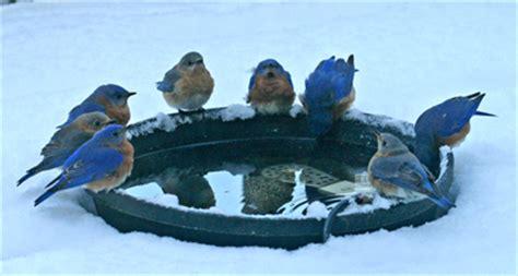viette s backyard bird feeding