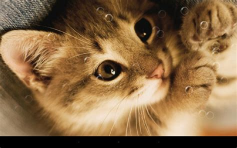 wallpaper lazy cat lazy cat live wallpaper android apps auf google play