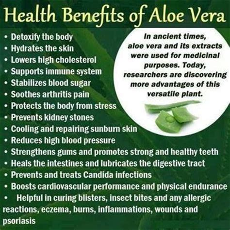 aloe vera facts aloe vera healthy facts pinterest