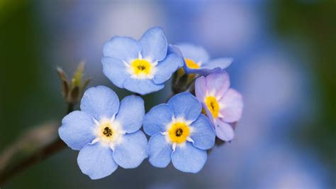 Blue Flowers by Most Beautiful Blue Flowers Www Imgkid The Image