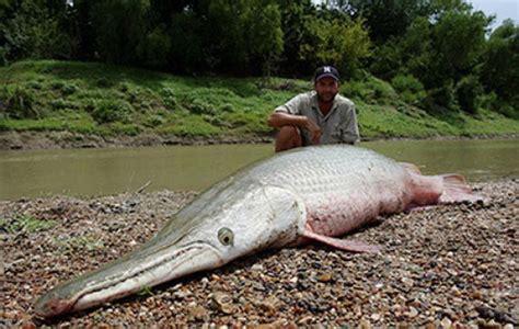 Alligator Gar Fish ~ Damn Cool Pictures