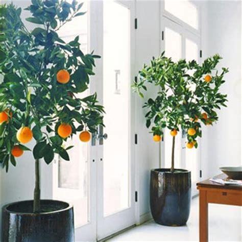 indoor house tree house plants cheap trick erika brechtel