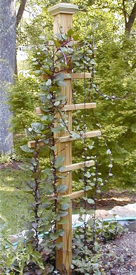 Cheap Garden Trellis Ideas Cheap Trellis Ideas Woodworking Projects Plans
