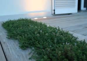 giardino pensile definizione illuminazione giardini progettazione illuminazione