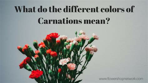 carnation color meanings color their world with carnations