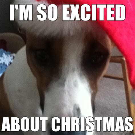 Memes About Christmas - i m so excited about christmas christmas dog quickmeme
